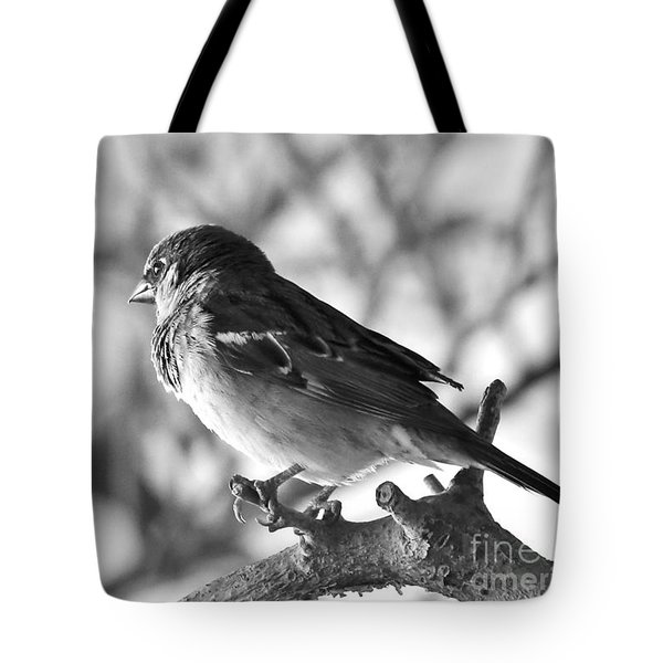 Chickadee Tote Bag by Sheila Ping