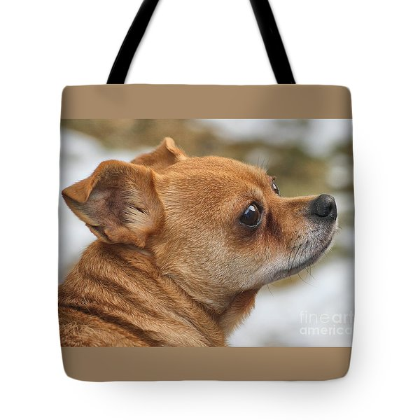 Tote Bag featuring the photograph Chihuahua by Debbie Stahre