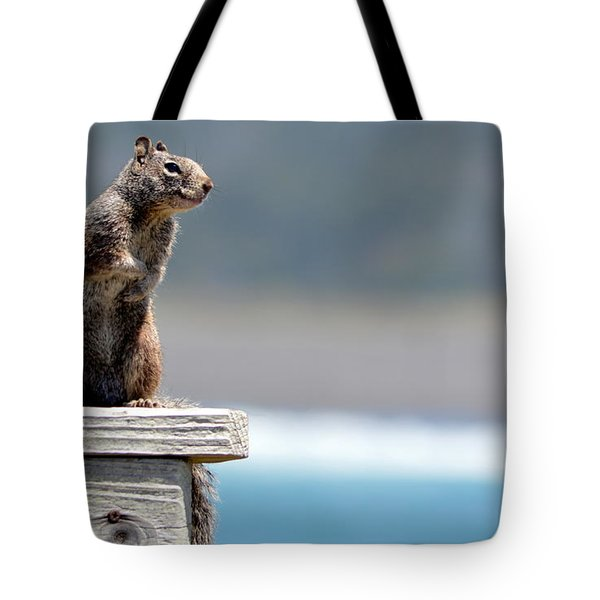 Chilly Squirrel Tote Bag