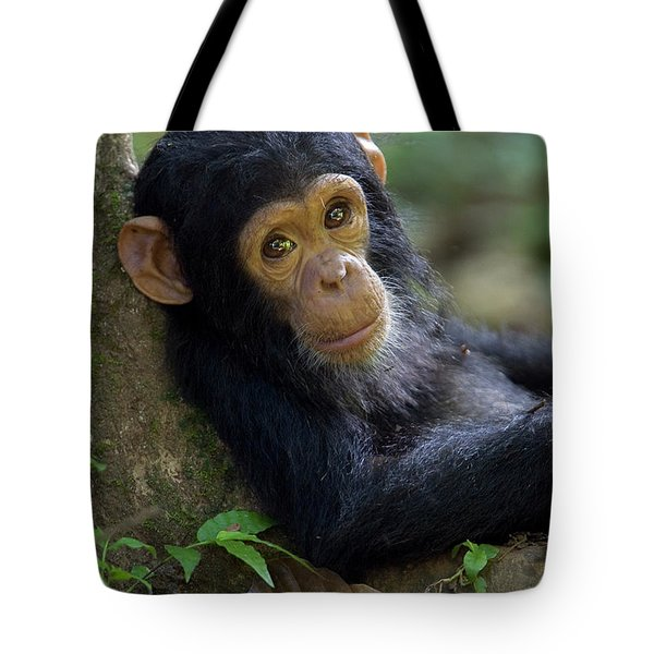 Tote Bag featuring the photograph Chimpanzee Pan Troglodytes Baby Leaning by Ingo Arndt