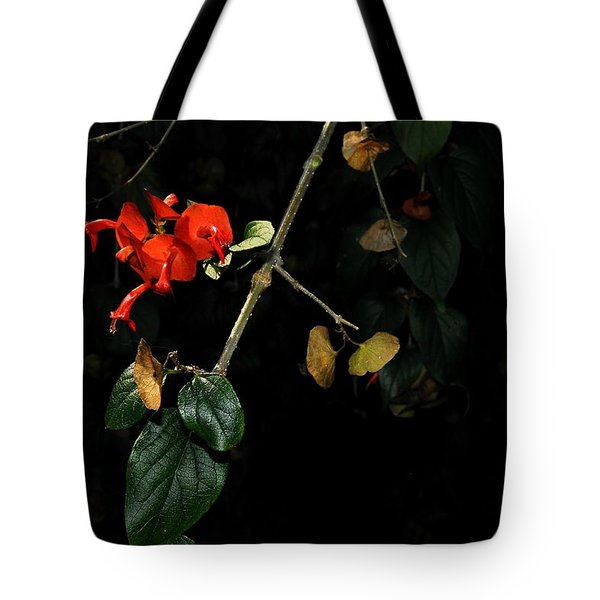 Chinese Hat Plant Tote Bag
