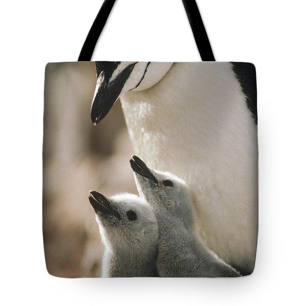 Chinstrap Penguin Pygoscelis Antarctica Tote Bag by Tui De Roy