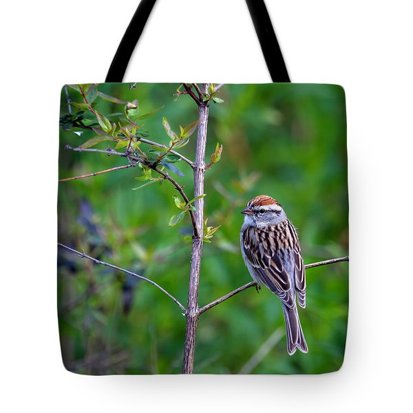 Chipping Sparrow Tote Bag