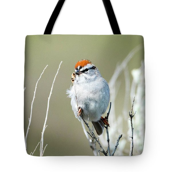 Tote Bag featuring the photograph Chipping Sparrow by Mike Dawson