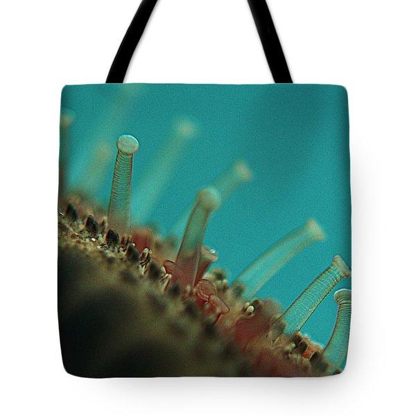 Chocolate Chip Starfish Tote Bag