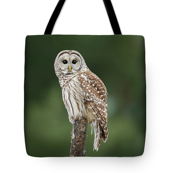 Chouette Perchee. Tote Bag by Denis Dumoulin