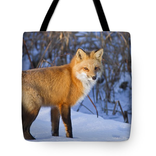 Christmas Fox Tote Bag by Mircea Costina Photography