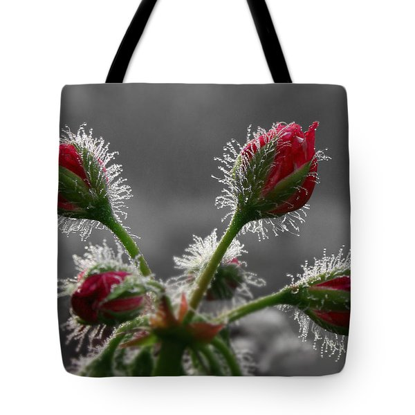 Christmas In May Tote Bag by Lori Deiter