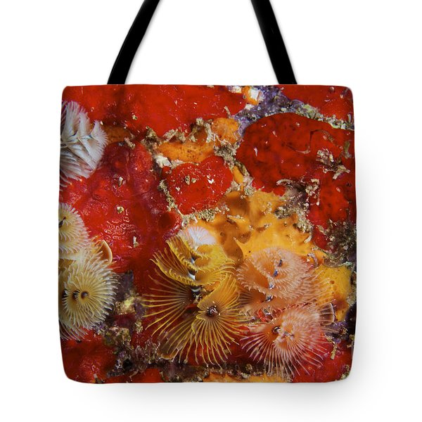 Christmas Tree Worms, Bonaire Tote Bag by Terry Moore