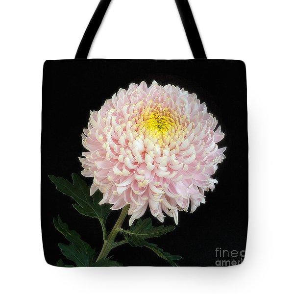 Chrysanthemum 'otome Pink' Tote Bag