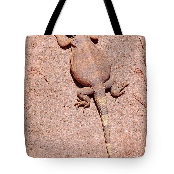 Chuckwalla, Saurolamus Ater Tote Bag