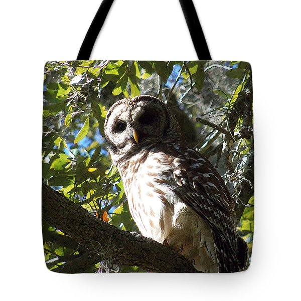 Circle B Bar Barred Owl 002 Tote Bag by Chris Mercer