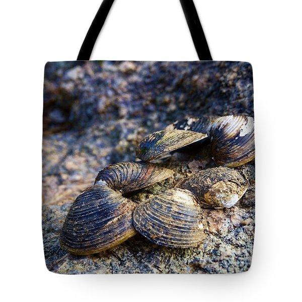 Clam Shells Tote Bag
