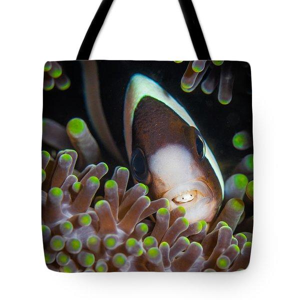 Clarks Anemone Fish Tote Bag