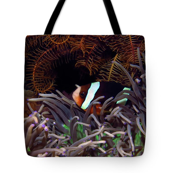 Clark's Anemonefish, Indonesia 2 Tote Bag