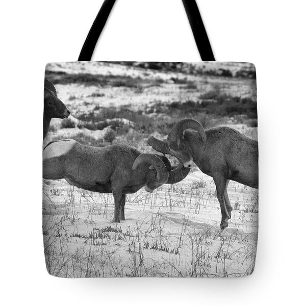 Clash Of The Bighonr Bruisers Tote Bag