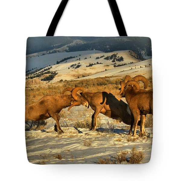 Clash Of The Bighorn Brawlers Crop Tote Bag