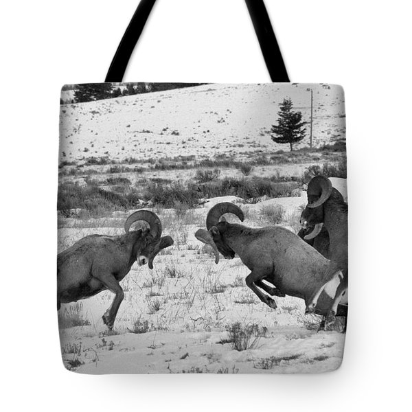 Clash Of The Bighorn Bruisers Tote Bag