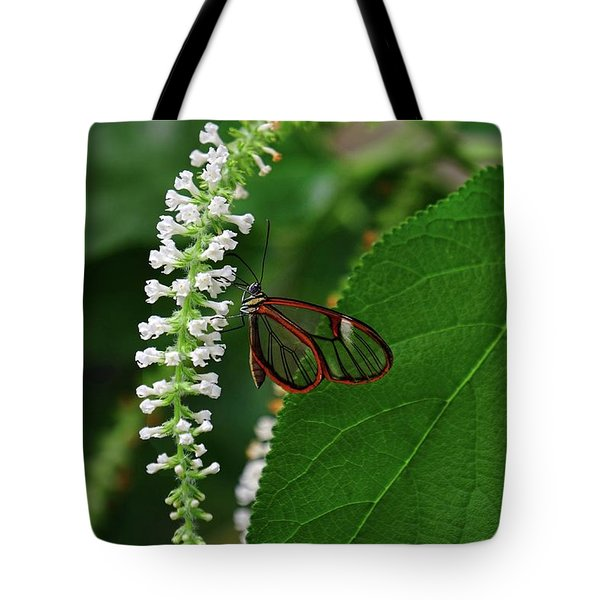 Clearwing Butterfly Tote Bag by Ronda Ryan