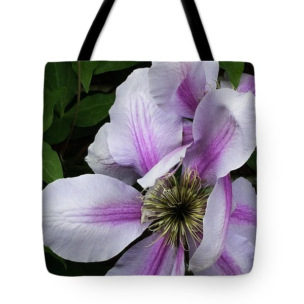 Tote Bag featuring the photograph Clematis Posing by Michael Friedman