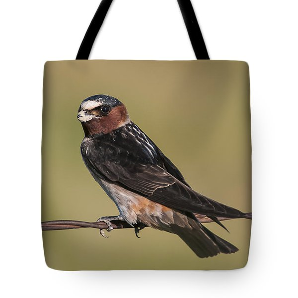 Tote Bag featuring the photograph Cliff Swallow by Gary Lengyel