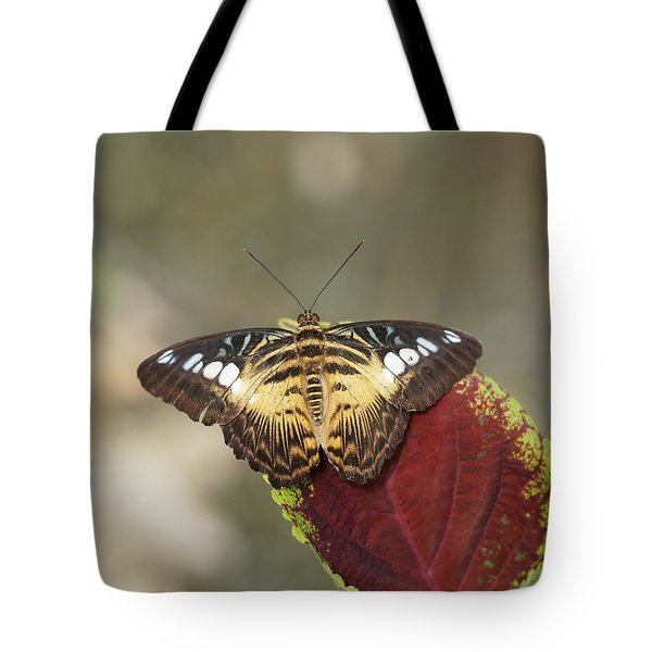 Tote Bag featuring the photograph Clipper Butterfly by Paul Gulliver