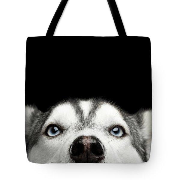 Close-up Head Of Peeking Siberian Husky Tote Bag