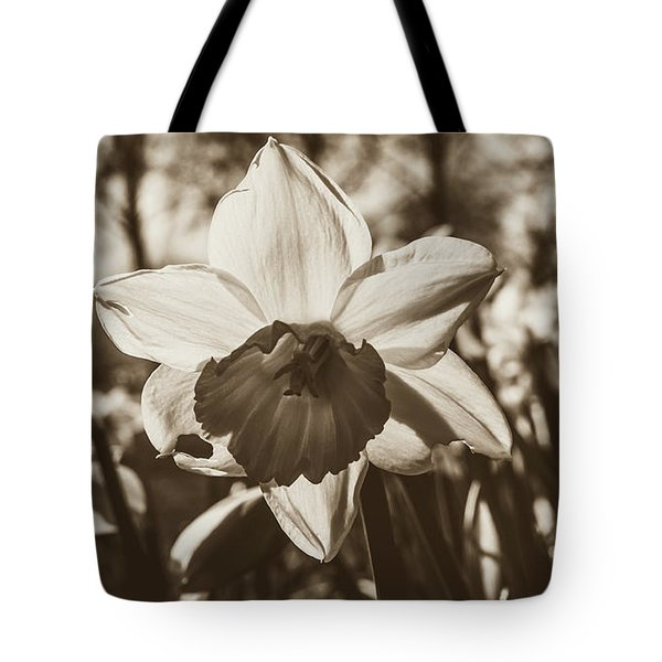 Tote Bag featuring the photograph Close Up Of Daffodil Flower by Jacek Wojnarowski