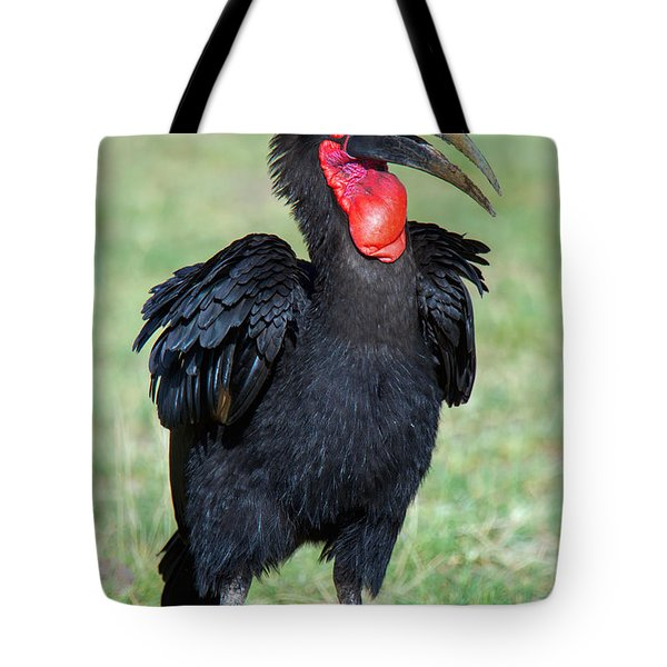 Close-up Of Ground Hornbill Bucorvidae Tote Bag by Panoramic Images
