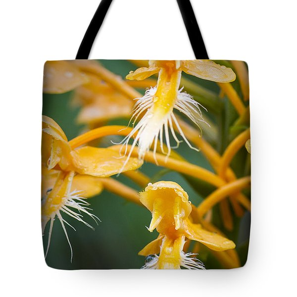 Close-up Of Yellow Fringed Orchid Tote Bag
