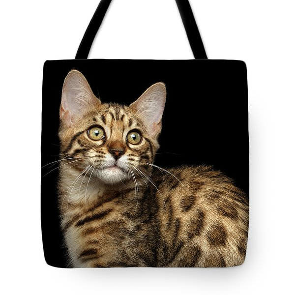 Closeup Bengal Kitty On Isolated Black Background Tote Bag by Sergey Taran