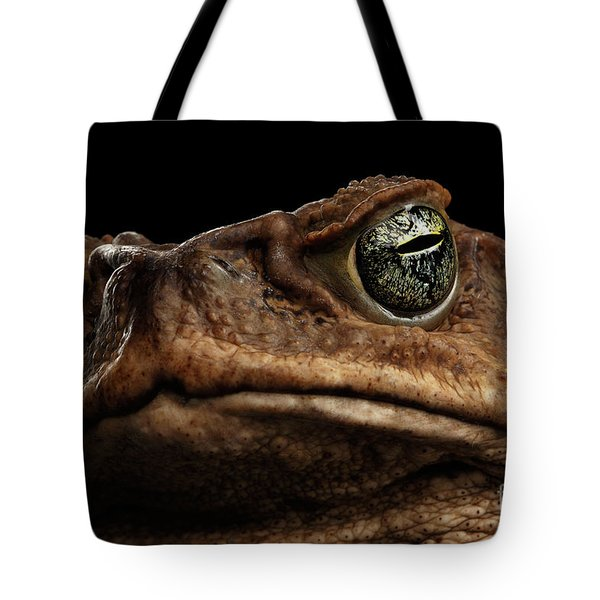 Closeup Cane Toad - Bufo Marinus, Giant Neotropical Or Marine Toad Isolated On Black Background Tote Bag
