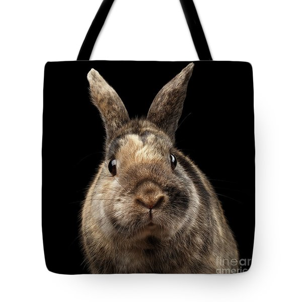 Closeup Funny Little Rabbit, Brown Fur, Isolated On Black Backgr Tote Bag