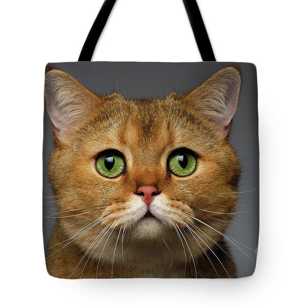 Closeup Golden British Cat With  Green Eyes On Gray Tote Bag by Sergey Taran
