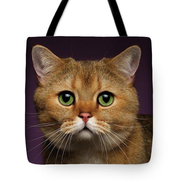 Closeup Golden British Cat With  Green Eyes On Purple  Tote Bag by Sergey Taran