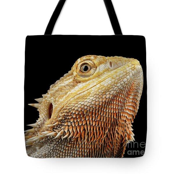Closeup Head Of Bearded Dragon Llizard, Agama, Isolated Black Background Tote Bag