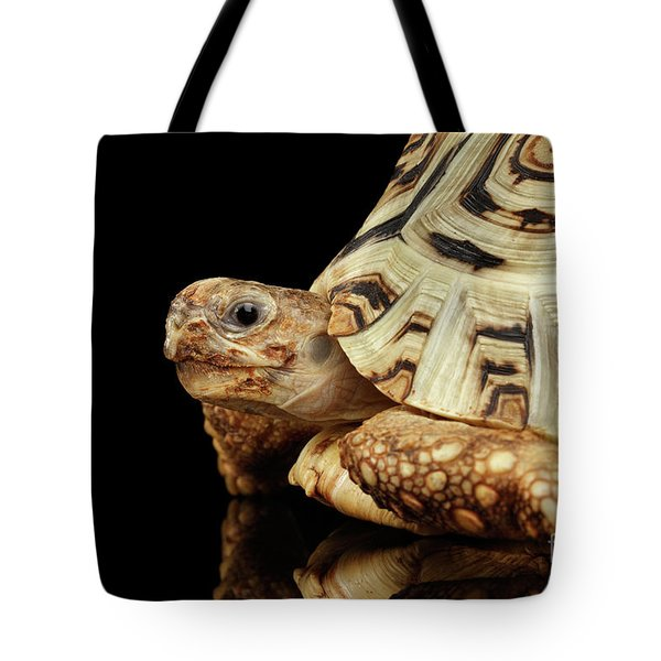 Closeup Leopard Tortoise Albino,stigmochelys Pardalis Turtle With White Shell On Isolated Black Back Tote Bag by Sergey Taran