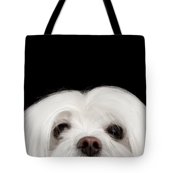 Closeup Nosey White Maltese Dog Looking In Camera Isolated On Black Background Tote Bag by Sergey Taran