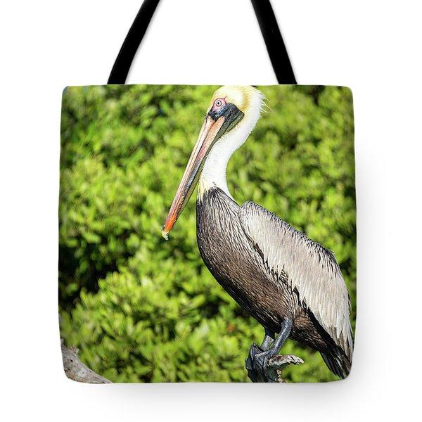 Closeup Of A Brown Pelican Tote Bag