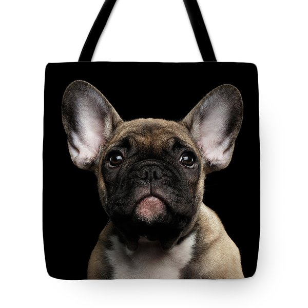 Closeup Portrait French Bulldog Puppy, Cute Looking In Camera Tote Bag