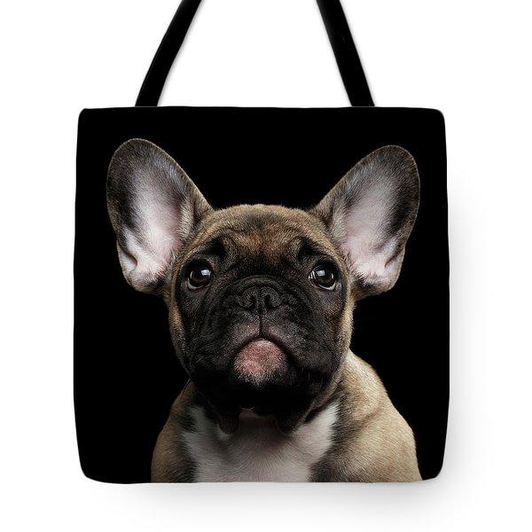 Closeup Portrait French Bulldog Puppy, Cute Looking In Camera Tote Bag by Sergey Taran