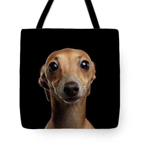 Closeup Portrait Italian Greyhound Dog Looking In Camera Isolated Black Tote Bag