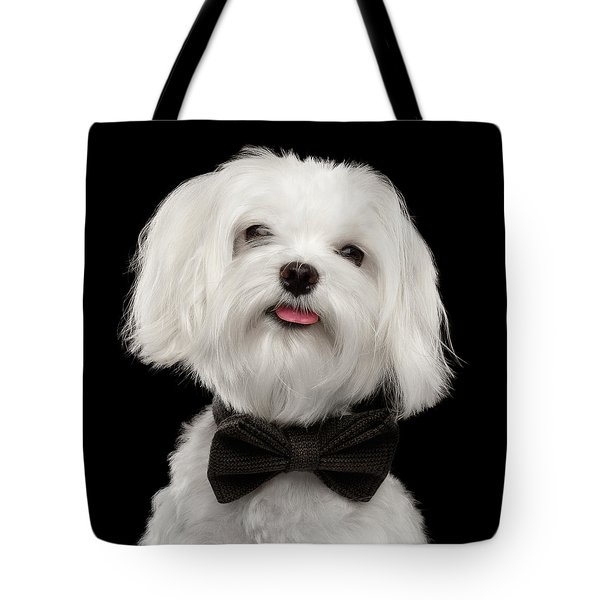 Closeup Portrait Of Happy White Maltese Dog With Bow Looking In Camera Isolated On Black Background Tote Bag