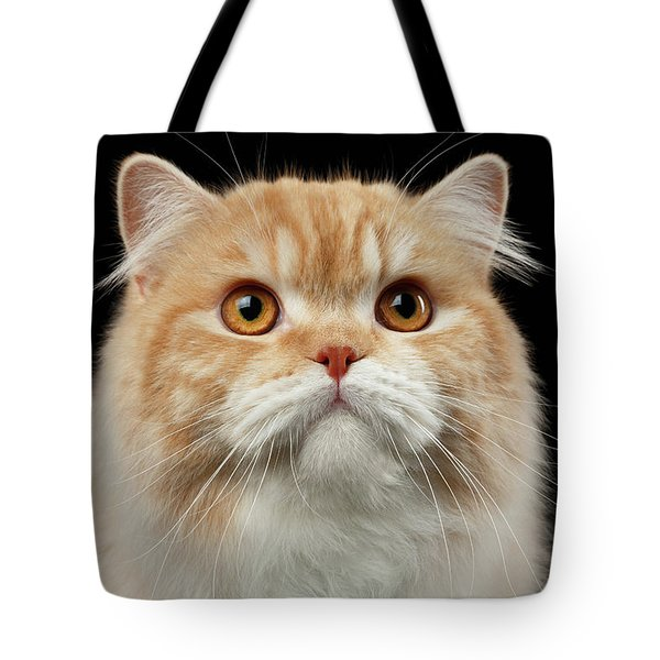 Closeup Portrait Of Red Big Persian Cat Angry Looking On Black Tote Bag