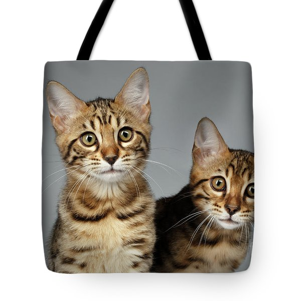 Closeup Portrait Of Two Bengal Kitten On White Background Tote Bag by Sergey Taran