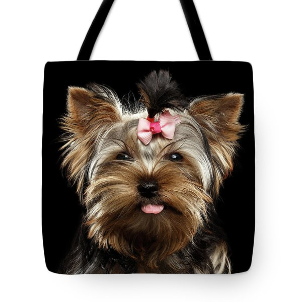 Closeup Portrait Of Yorkshire Terrier Dog On Black Background Tote Bag