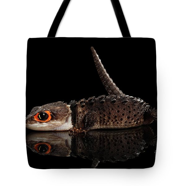 Closeup Red-eyed Crocodile Skink, Tribolonotus Gracilis, Isolated On Black Background Tote Bag