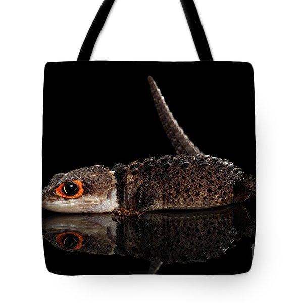 Closeup Red-eyed Crocodile Skink, Tribolonotus Gracilis, Isolated On Black Background Tote Bag