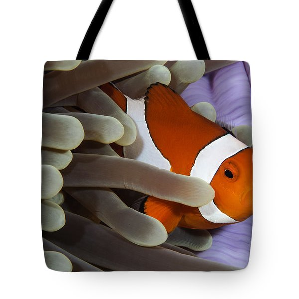 Clown Anemonefish, Indonesia Tote Bag by Todd Winner