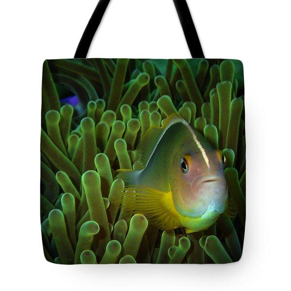 Clownfish Close Up Tote Bag